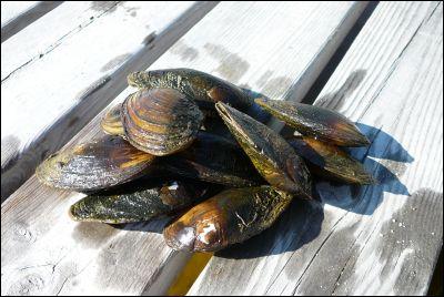 Plockade upp en massa musslor.