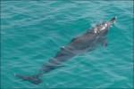 Delfinen vi såg..