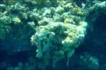 Koraller..