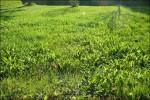 Hemma behöver gräset klippas.