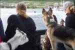 Ja, alla var intresserade av vattenskidorna :)