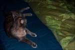 Kattis.. sängkompisen.