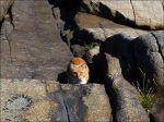 En katt tittade fram vid klipporna