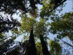 Ståtliga träd där